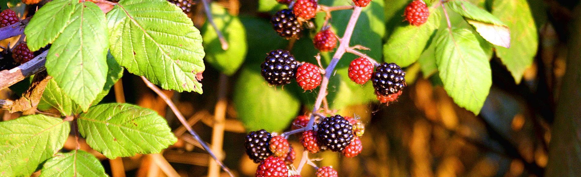 Raccogli la prossima estate i frutti della salute!