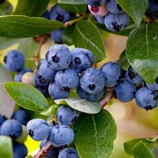 vendita on-line Frutti di bosco